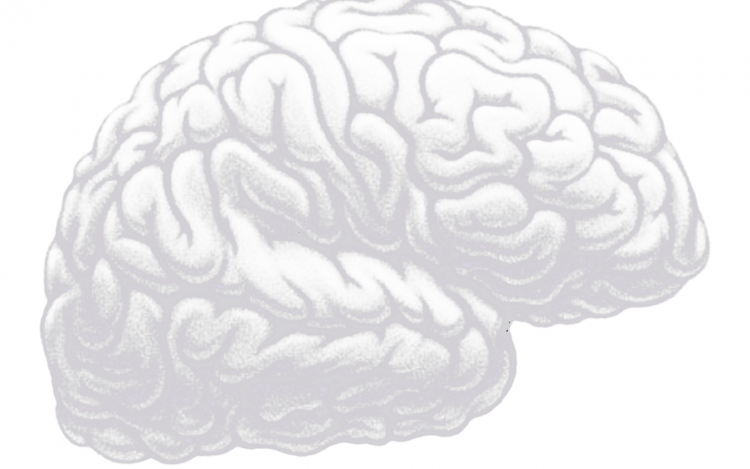 Brain – Overview – Point of Wellness #1